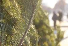 В карталинских поселениях готовятся к Новому году