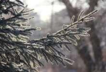 В Карталах ожидается туманное утро