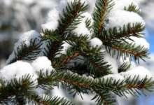 В Карталах снега не будет