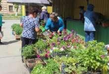 Бабушки на рынке