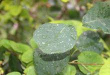 Завтра будет дождливый день