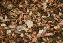 В Карталинском районе возможны дожди