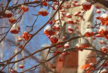 1 февраля – Макар-весноуказчик