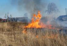 Вчера сады горели