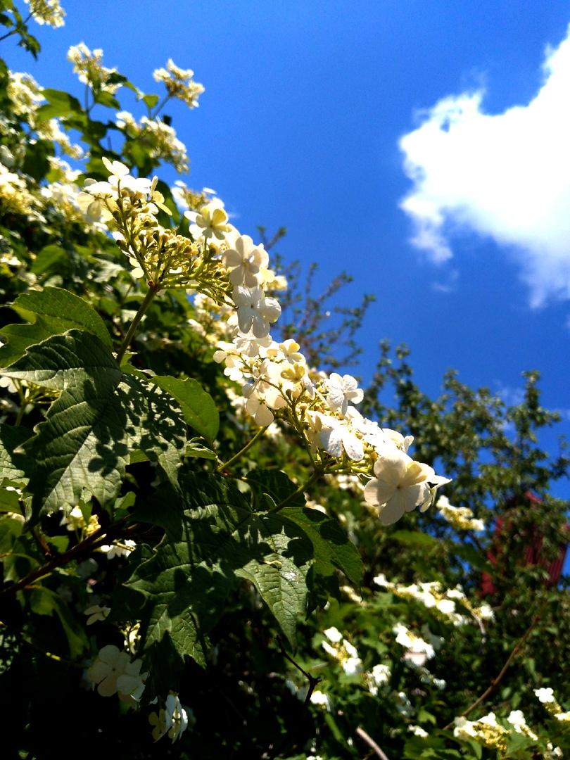 Карталинские школьники запечатлели лучшие моменты лета
