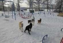 В Карталинском парке играют дети