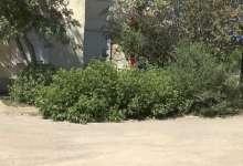 Карталинские дворы зарастают кустарниками
