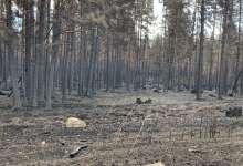 Пожар на территории Еленинского поселения потушили