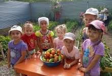 В детском саду овощи поспели