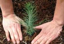 Лес начнут восстанавливать