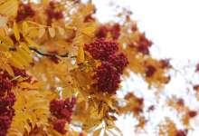 В Карталах осень красивая